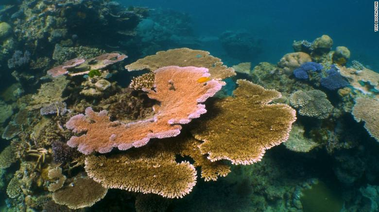 The race to save the Great Barrier Reef
