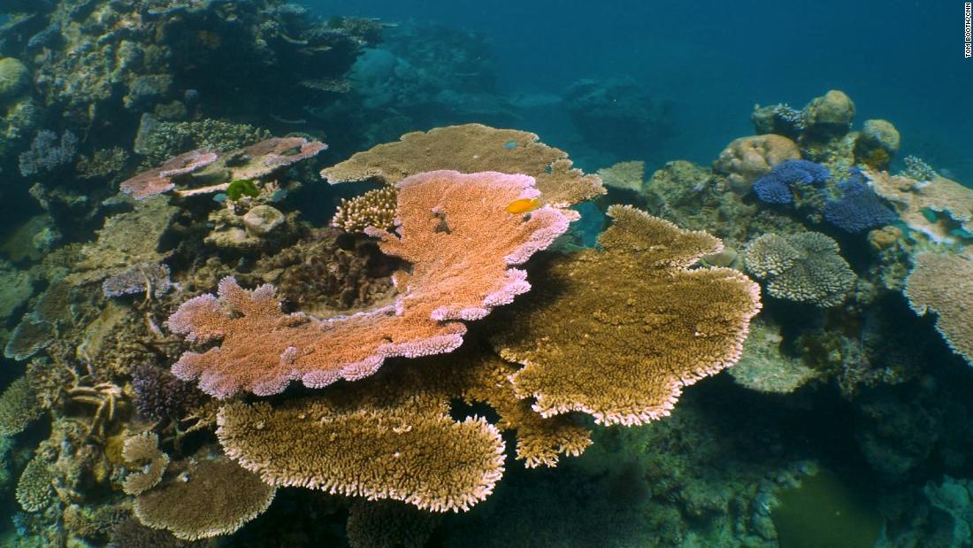Scientists used speakers to make dead coral reefs sound healthy. The fish came back
