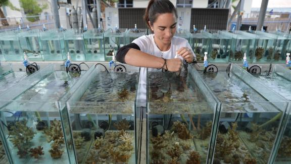 Jessica Bellworthy working with corals in her laboratory's Red Sea Simulator system.
