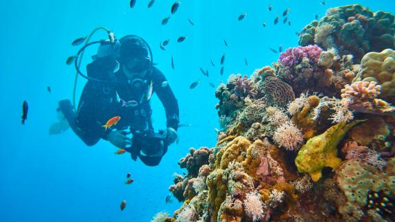 Jerome Delafosse from the Energy Observer Project examines coral in the Gulf of Aqaba.
