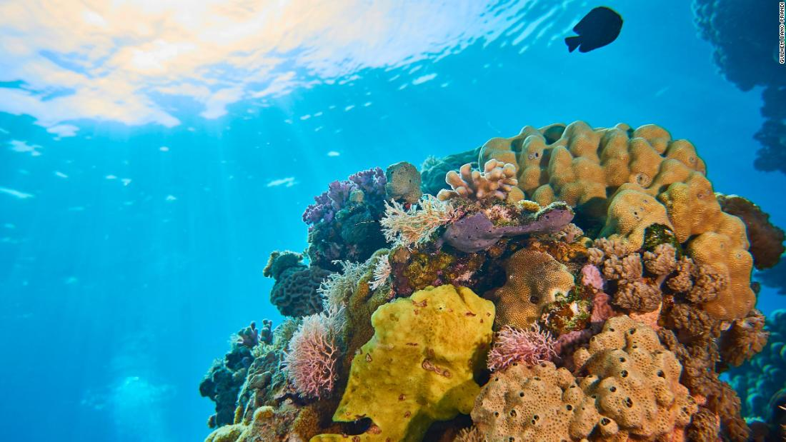 "Coral reefs are hotspots for biodiversity and a vital part of the marine ecosystem, <a href=""https://ocean.si.edu/ocean-life/invertebrates/corals-and-coral-reefs"" target=""_blank"">home to a quarter of all marine species. </a>"