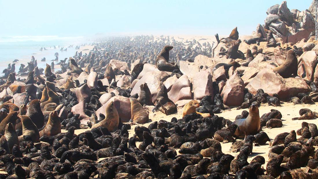 <strong>Seal colony: </strong>The most common mammal along the Skeleton Coast, Cape fur seals live in colonies, with very large groups at Cape Cross and Angra Fria on the northern shore.