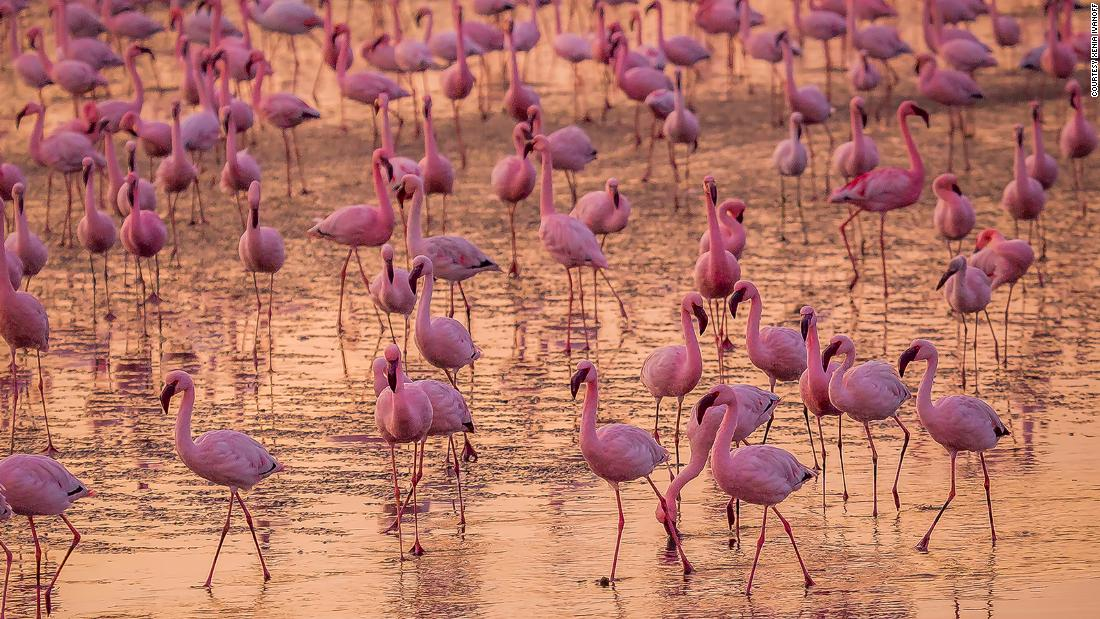 <strong>Bird life:</strong> Flocks of as many as 50,000 greater flamingos flourish in the shoreline's lagoons, estuaries and salt pans during the long migrations across the continent.
