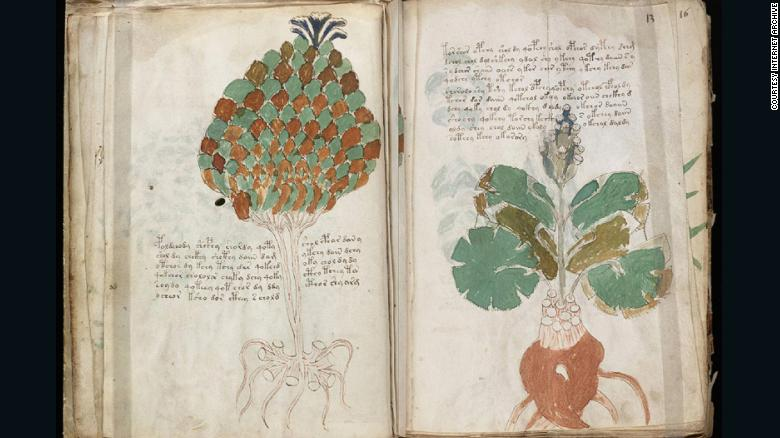 Some of illustrations in the book resemble known plants, others less so.