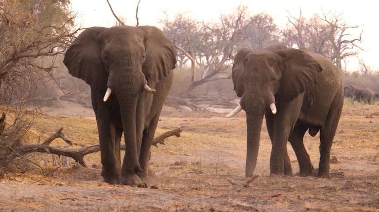 Can a Chinese law help save African elephants?