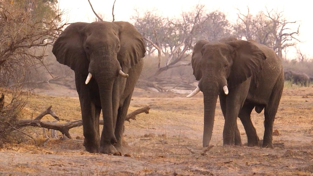 Can a Chinese law help stop elephant slaughter in Africa?