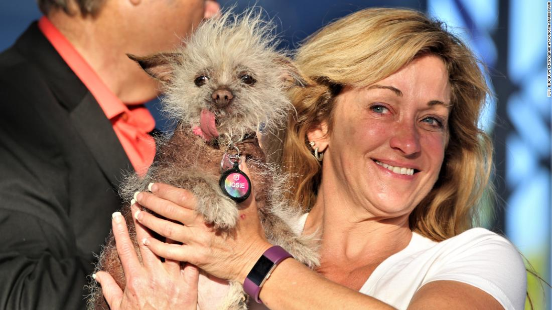 Another Chinese crested mix with yet another ... expressive? ... tongue, Josie is a regular at the World's Ugliest Dog Contest, organizers say.