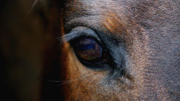Using the Equine Facial Action Coding System, researchers found horses can make 17 facial expressions.