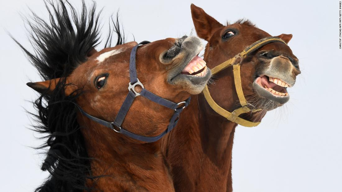 Horses Can Make Facial Expressions Just Like Humans Bet Cab