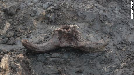 The site included the skull of an auroch, an extinct species of cattle.