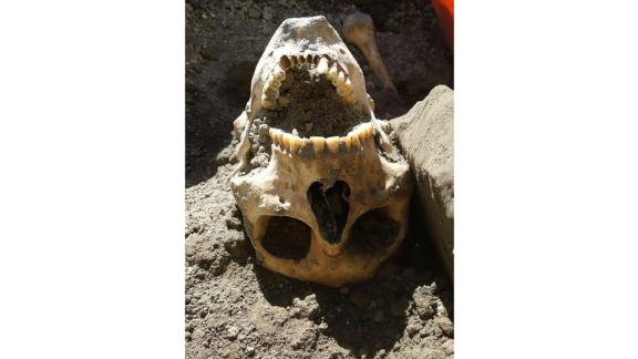 The man's skull shows some fractures, archaeologists say, but is mostly intact.
