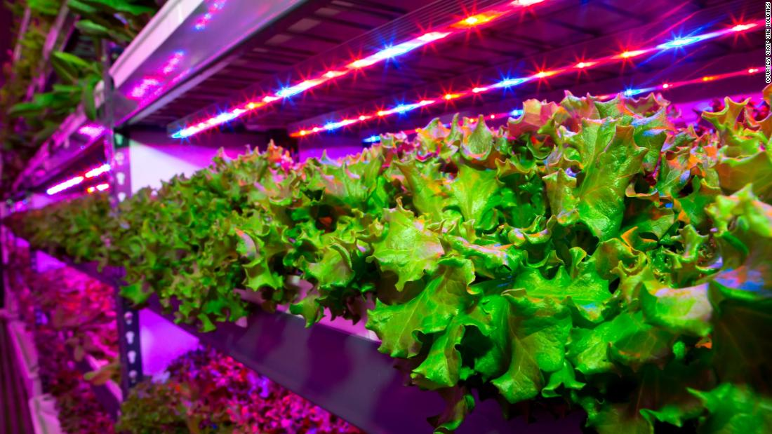 """Smart"" farms are increasingly popular field in the Middle East, such as the joint venture between agri-tech firm Crop One Holdings and Emirates Flight Catering to build the <a href=""https://edition.cnn.com/travel/article/dubai-vertical-farm-emirates-catering/index.html"" target=""_blank"">world's largest vertical farm</a>."