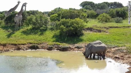 Rhinos are heavily protected at the Sibuya Game Reserve in South Africa