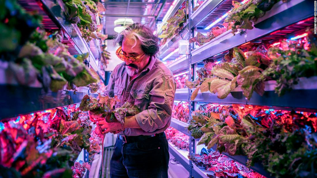 Crops in vertical farms are grown in controlled environments with a nutrient solution instead of soil, and LED lighting instead of sunlight.