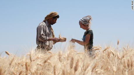 Amaia Arranz Otaegui with assistant Ali Shokaiteer, sampling cereals in Shubayqa.