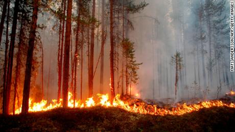 Fire burns in Karbole, Sweden, on July 15.
