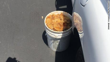 A five-gallon bucket filled with honeycomb that bee experts found in the hive.