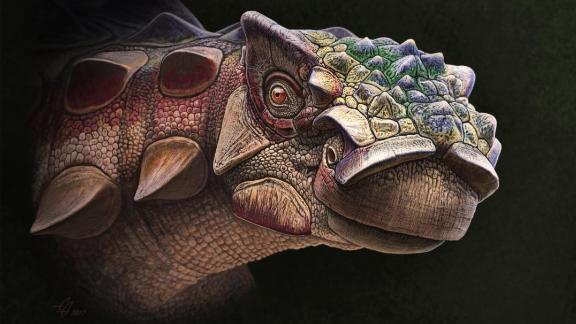 Life reconstruction of the head of the new armored dinosaur Akainacephalus johnsoni.