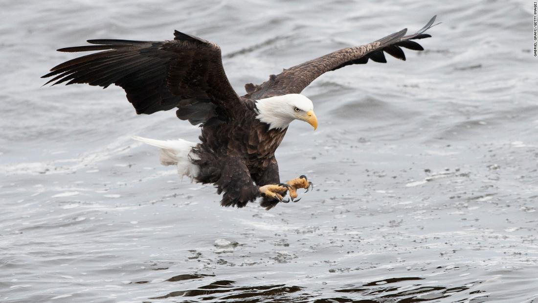 Letter To The Editor Endangered Species Act Needs Protection