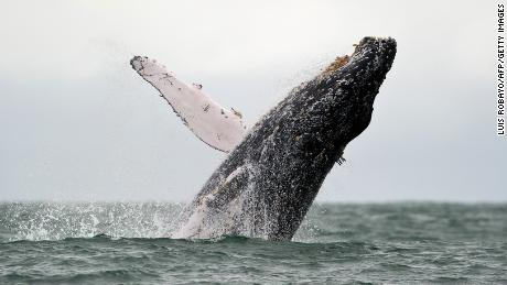 Teenager in critical condition after violating whale land on fishing boat