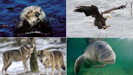 These animals might not be here without the Endangered Species Act