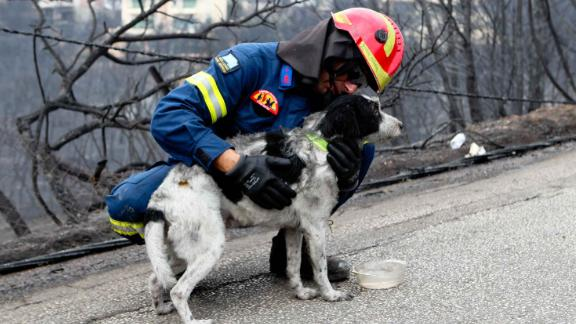 A firefighter is seen with a dog that was rescued from a burning house in Mati.
