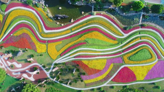 Nantong, China: Technicolor flowers are pictured in bloom at a green expo garden in east China