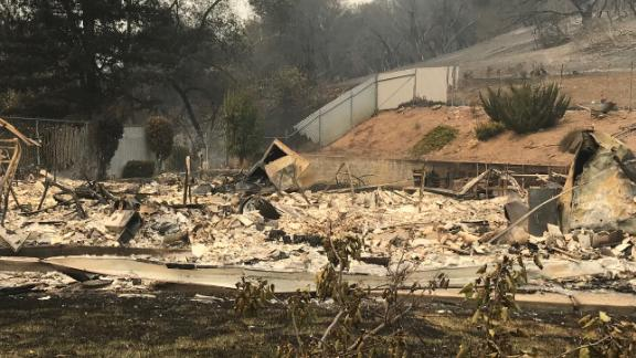 A green bush on a hillside behind a burning home was a respite for a female cat named Jinx.