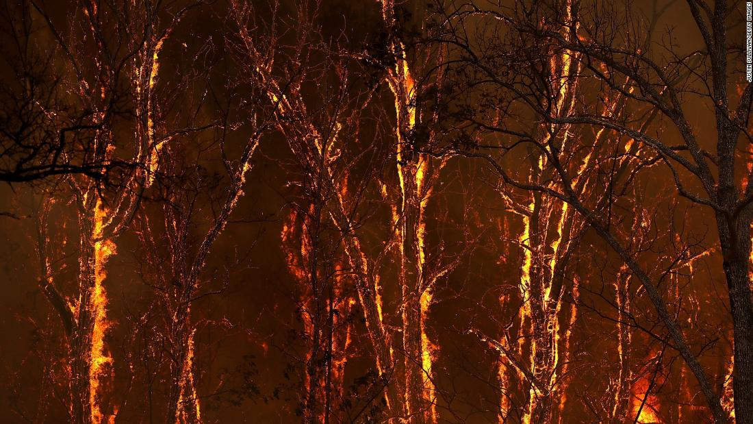 Flames from the Carr Fire burn through trees near Whiskeytown, California.