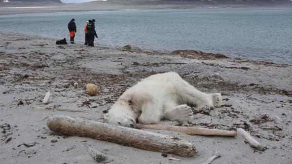 A polar bear was shot and killed after attacking a cruise ship guard, according to the German cruise company Hapag-Lloyd Cruises.