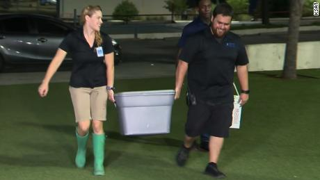 Staff bring the stolen shark back to the San Antonio Aquarium.