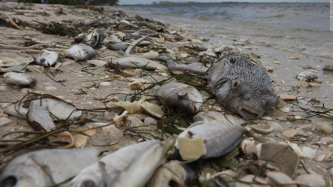 Fish are seen washed ashore on Sanibel Island.