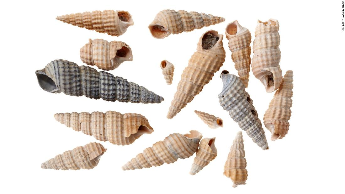 These shells, found in Rokin, are the oldest finds from the excavation and date back to 120,000 BC.