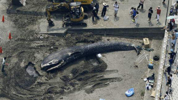 Photo taken by a Kyodo News helicopter shows a 10-meter-long dead blue whale washed ashore on a beach in Kamakura, Kanagawa Prefecture, on Aug. 6, 2018. Kyodo News/Getty Images
