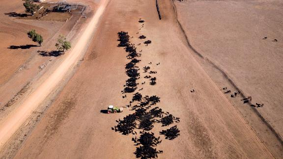 An aerial view of a drought-stricken farm's cattle feeding operation in New South Wales.
