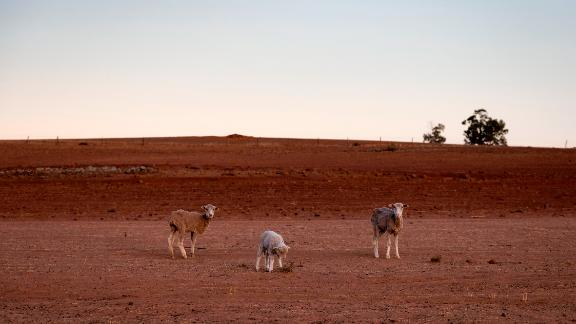 The entire state of NSW, home to the capital Canberra, is officially suffering from drought.
