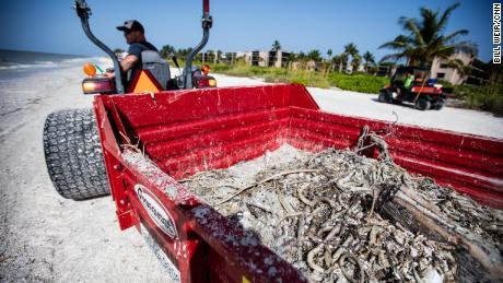 Florida's red tide has produced 2,000 tons of dead marine life and cost businesses more than $8 million