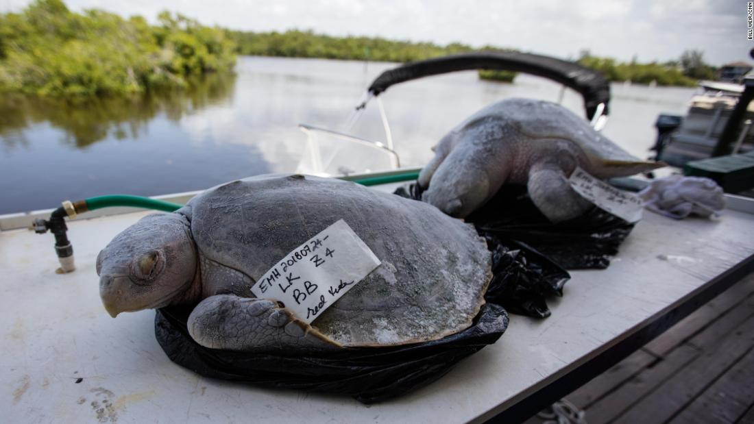 Floridas Red Tide Scientists Search For Smoking Gun In A Dead