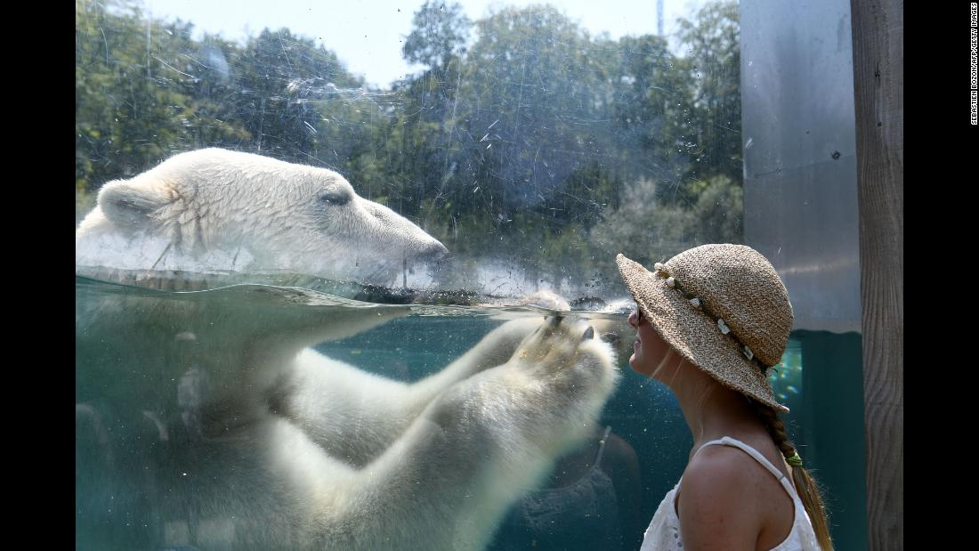 A woman watches a polar bear at a zoo in Mulhouse, France, on Friday, August 3.