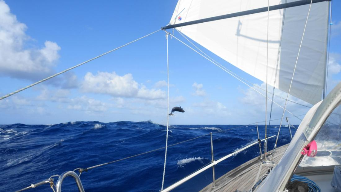 """We have enough memories to last us a lifetime,"" said Helen Tibbs, who took part in the round-the-world rally in 2017 with her husband Chris. This picture of a jumping whale was taken on board their yacht in the middle of the Pacific Ocean."