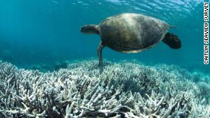 The Great Barrier Reef likely just experienced its most widespread bleaching event on record 180821112635-great-barrier-reef-bleaching-medium-plus-169