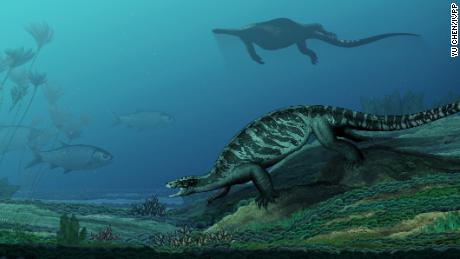 This 228 million-year-old turtle didn't have a shell