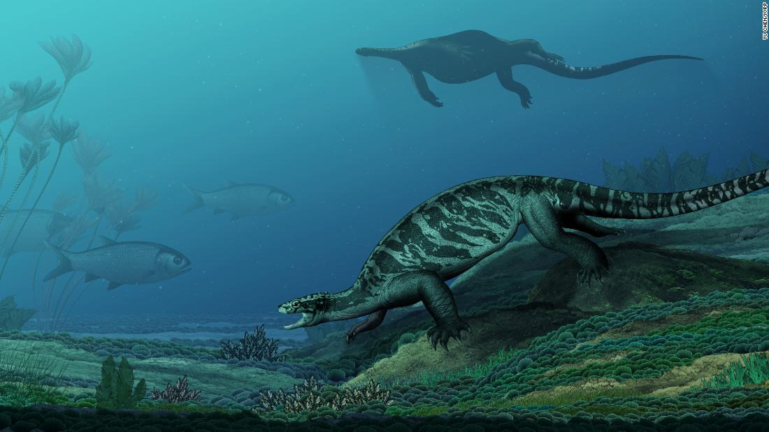 Eorhynchochelys sinensis is an early turtle that lived 228 million years ago. It had a toothless beak, but no shell.