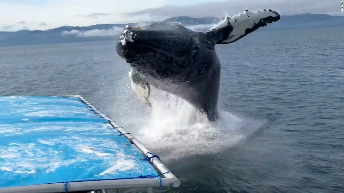 Boaters have close call with humpback whale - CNN Video