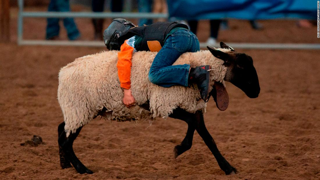 "A boy rides a sheep Wednesday, August 22, during ""mutton busting,"" an event at the Snowmass Rodeo in Snowmass, Colorado."