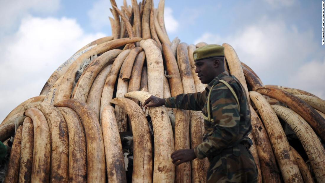 DNA tests on elephant tusks expose 'three major export cartels'