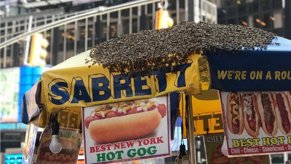 Who knew bees liked to supplement their diet with hot dogs?