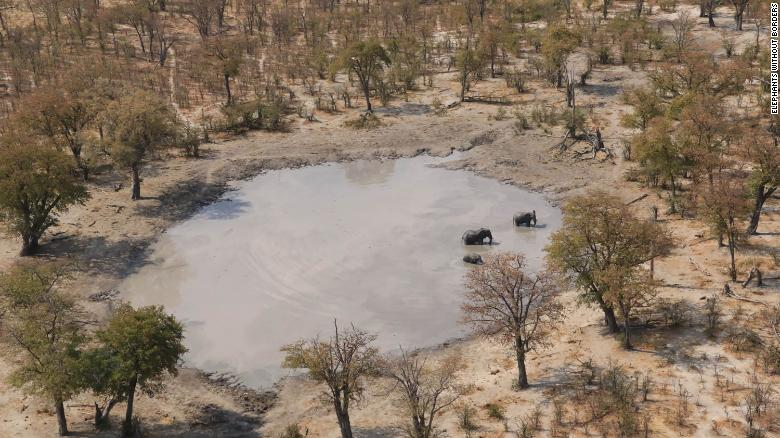 Dozens of elephant carcasses found in Botswana