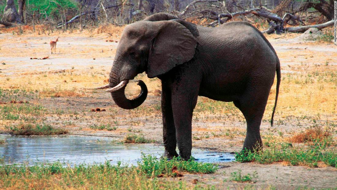 botswana dozens of elephant carcasses found cnn