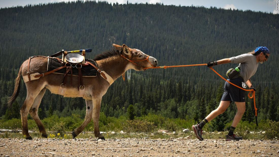 the annual running of the burros cnn